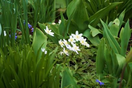White Flower 7